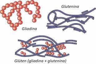 gluten3
