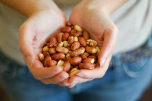 assar os amendoins