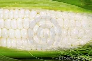 milho-branco-17798316