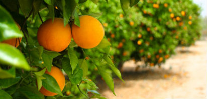 Tabela de Safra de Frutas